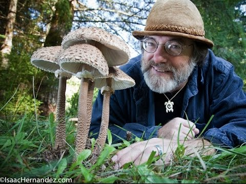 Paul Stamets picture