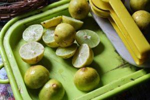 لیمو ها را برای اب گیری اماده