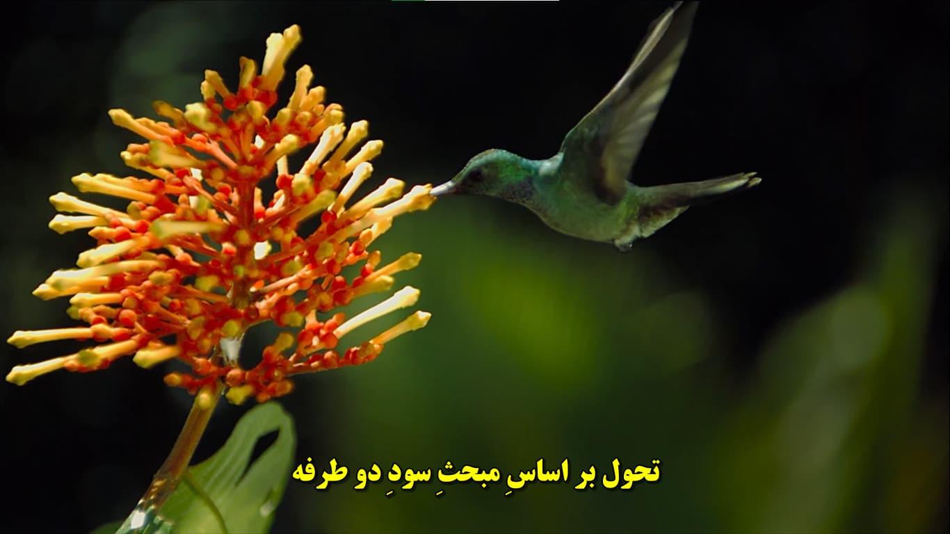 تصویر طبیعت و حیوانات